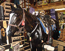 Virginia Tack Riding Apparel Gifts Supplies The Horse